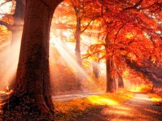 обои Богатая на краски осень фото
