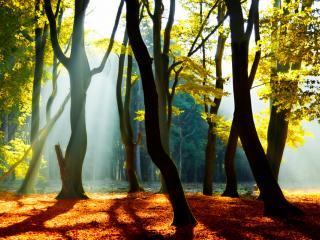 обои Извилистые стволы деревьев фото