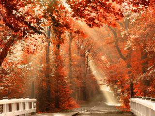 обои Красная осень,   белый мостик фото