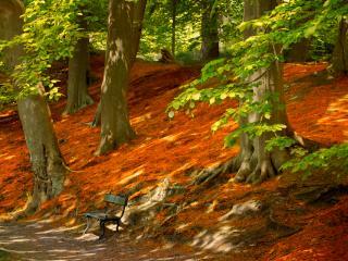 обои Одинокая скамейка в осеннем лесу фото