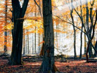 обои Осень в лесу,   осенние краски фото