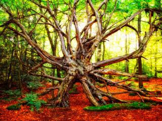 обои Старая коряга в осеннем лесу фото