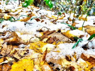 обои Только опали листья и уже снег выпал фото