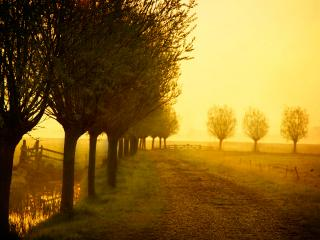 обои Утренний туман осенним утром фото