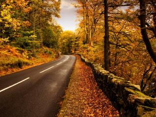 обои Дорога возле леса фото