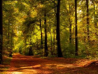 обои Дорога усыпанная опавшими листьями фото