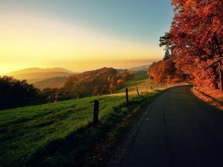 обои Дорога,   поле,   лес с желтой листвой фото