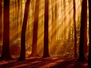 обои Дымка и лучи солнца в лесу фото