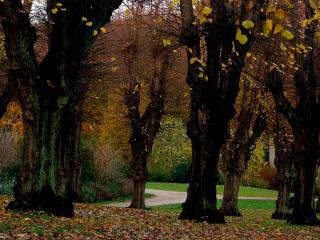 обои Красивые деревья,   опавшие листья фото