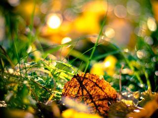 обои Осенние листья в траве фото