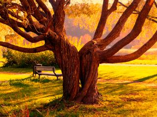 обои Причудливые изгибы дерева фото