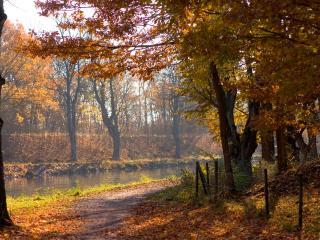 обои Река и  тропинка,   желтая листва фото