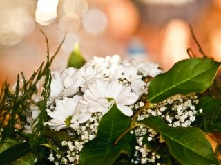 обои Белые цветы фото