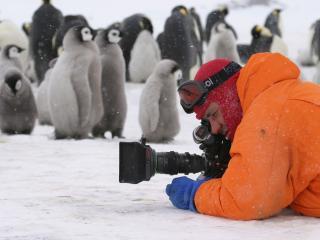 обои Человек снимет пингвинов фото