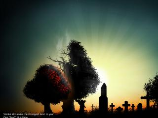 обои Вечернее кладбище фото