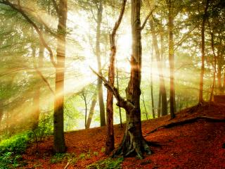 обои Осенний лес,   лучи солнца фото