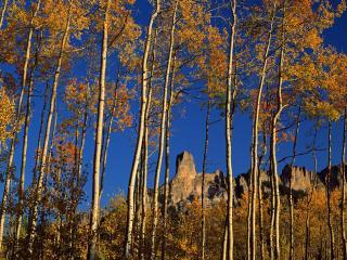 обои Высокие деревья,   желтые листья фото