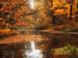 обои Конкретная осень,   желтые деревья,   водоем фото