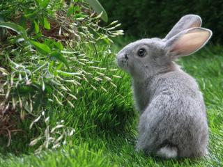 обои Кролик в кустах фото