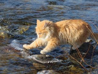обои Рыжий кот на камнях фото