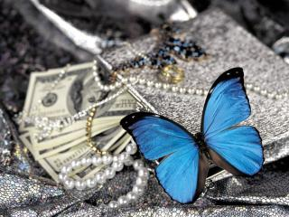 обои Украшения и бабочка фото