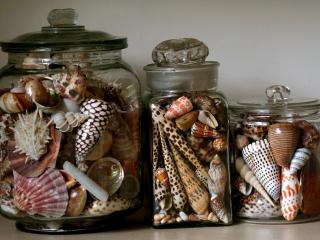 обои Банки с ракушками,   коллекция фото
