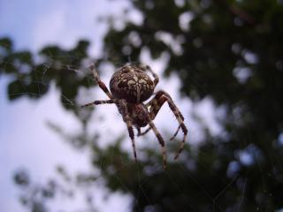 обои Сети паука фото