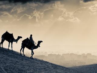 обои Верблюды,   корабли пустыни фото