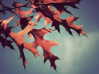 обои Осенние красные листья фото