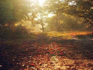 обои Осень,   листва опадает фото