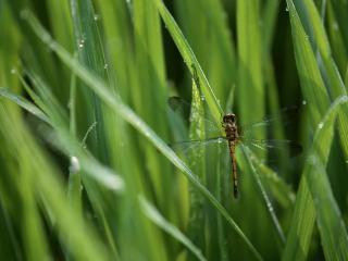 обои В траве сидит стрекоза фото