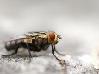 обои Колючая муха фото