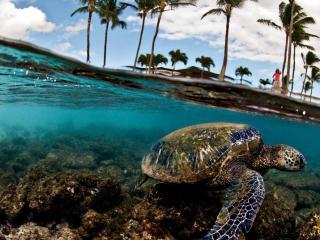 обои Мир морской черепахи фото