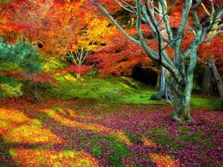 обои Краски яркие осени фото