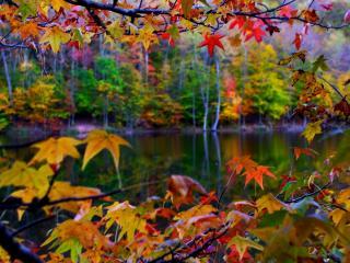 обои Осенняя природа,    макро фото