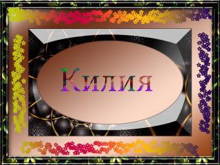 обои Город Украины Килия фото