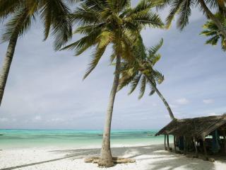 обои Ветхая лачуга под пальмами фото