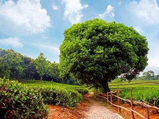 обои Вымощенная дорожка вдоль огородов фото