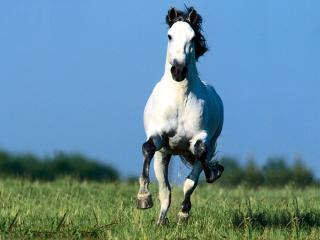 обои Конь несется аллюром фото