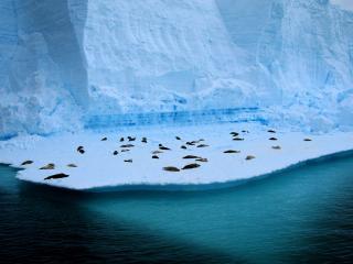 обои Айсберг - пляж для морских котиков фото