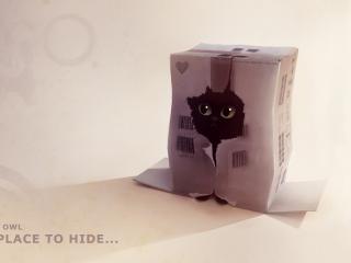 обои Котенок прячется в коробке фото