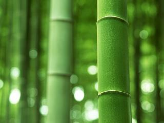 обои Стебли зеленого бамбука фото