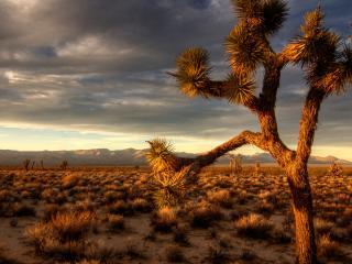 обои Прерия,   пустыня,   пустынное дерево фото