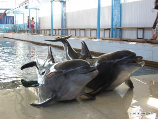 обои Пара дельфинов на берегу фото