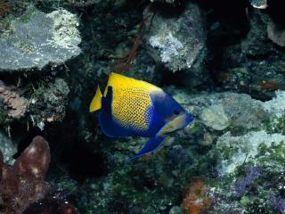 обои Обитательница подводной фауны фото