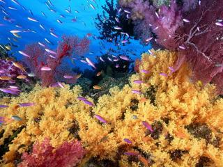 обои Жизнь подводного мира фото