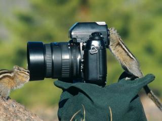 обои Фотокамера и  бурундуки скажите чиз фото