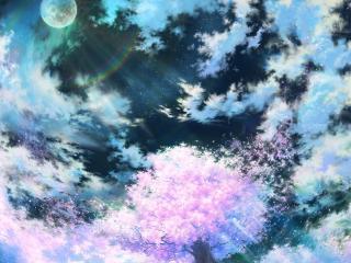 обои Цветущая сакура в лунную ночь фото