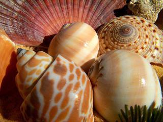 обои Красивейшие дары моря фото