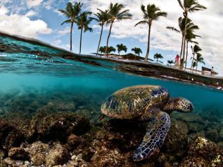 обои Черепаха вылезла из воды фото
